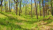 Springtime, Heritage Trail