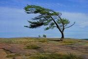 The Tree at Kilbear