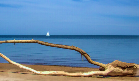 Driftwood and Sailboat