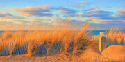 Sun Kissed Beach Grass